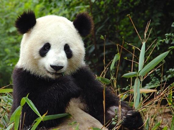 bamboe weetjes over bamboe kleding