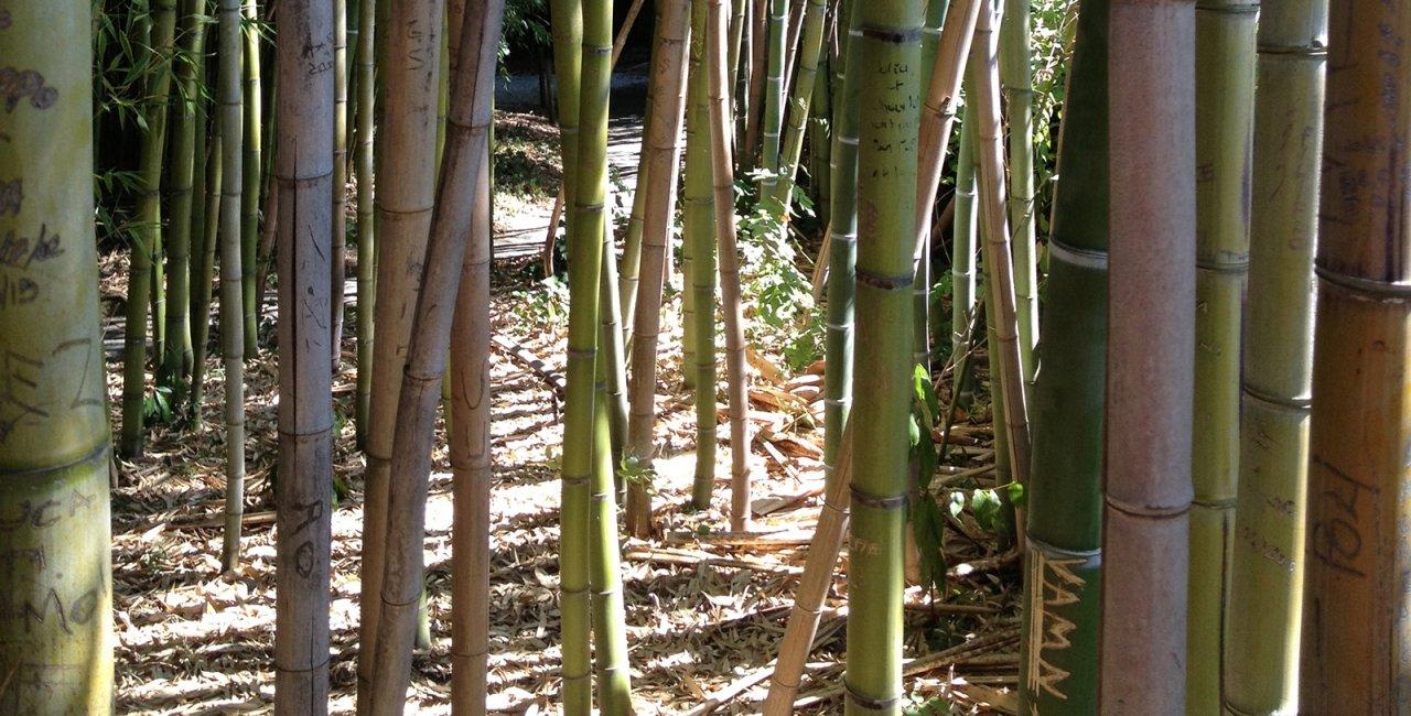 De voordelen van bamboe kleding